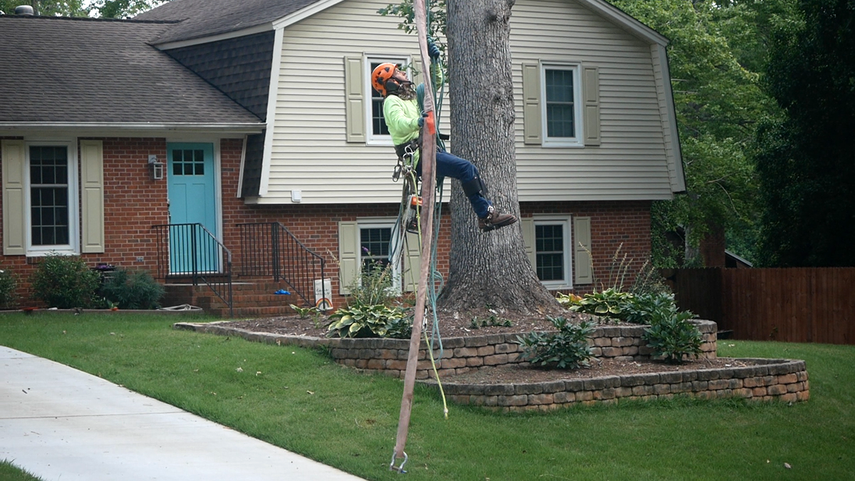 BG Tree Services LLC