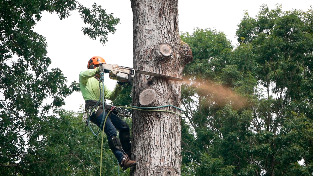 BG Tree Services LLC